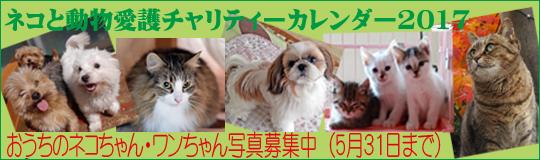 ネコと動物愛護チャリティーカレンダー2017おうちのネコちゃん・ワンちゃん写真募集