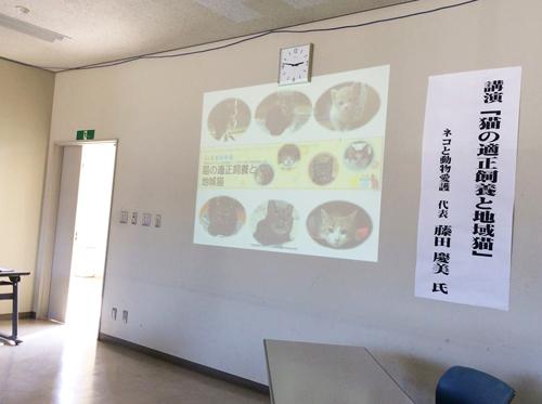 猫の適正飼養と地域猫