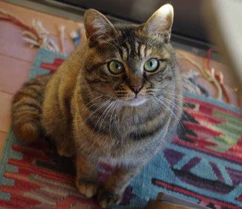 猫堂、ネコと動物愛護チャリティーカレンダー2017、1月-1