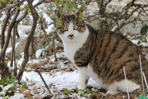 猫堂、ネコと動物愛護チャリティーカレンダー2017、1月-2