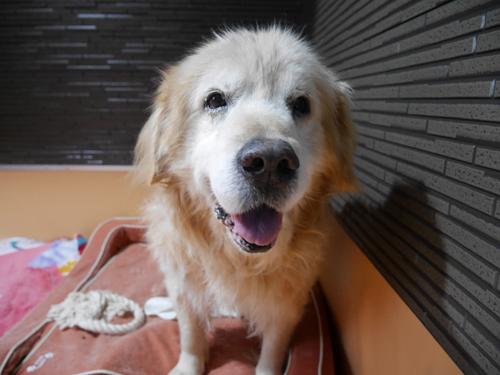 猫堂、ネコと動物愛護チャリティーカレンダー2017、1月-3