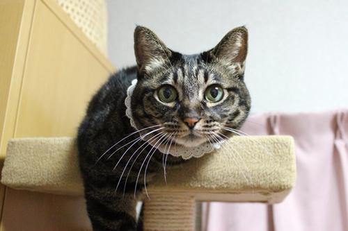 猫堂、ネコと動物愛護チャリティーカレンダー2017、2月-1