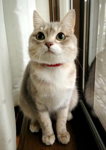 猫堂、ネコと動物愛護チャリティーカレンダー2017、3月-2