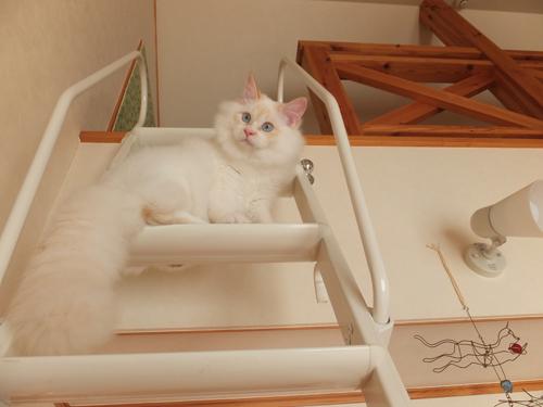 猫堂、ネコと動物愛護チャリティーカレンダー2017、4月-2
