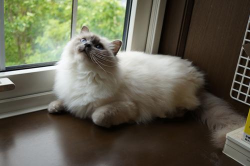 猫堂、ネコと動物愛護チャリティーカレンダー2017、6月-1
