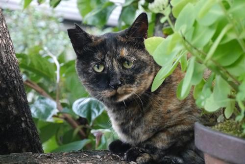 猫堂、ネコと動物愛護チャリティーカレンダー2017、8月-1