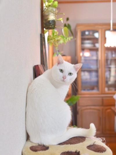 猫堂、ネコと動物愛護チャリティーカレンダー2017、9月-1
