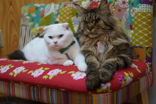 猫堂、ネコと動物愛護チャリティーカレンダー2017、10月-2