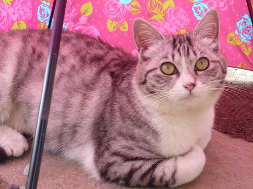 猫堂、ネコと動物愛護チャリティーカレンダー2017、10月-3
