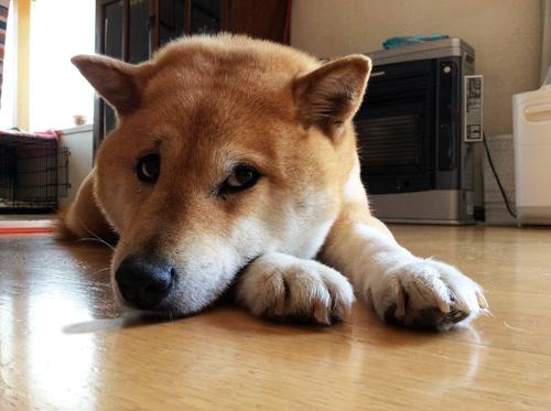 猫堂、ネコと動物愛護チャリティーカレンダー2017、11月-1