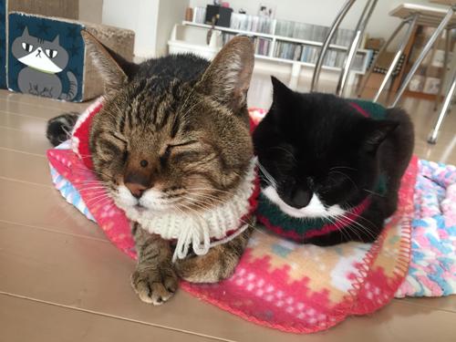 猫堂、ネコと動物愛護チャリティーカレンダー2017、12月-1