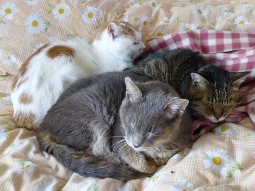猫堂、ネコと動物愛護チャリティーカレンダー2017、1月-03