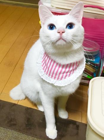 猫堂、ネコと動物愛護チャリティーカレンダー2017、1月-07