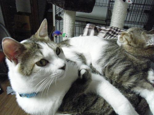 猫堂、ネコと動物愛護チャリティーカレンダー2017、2月-04