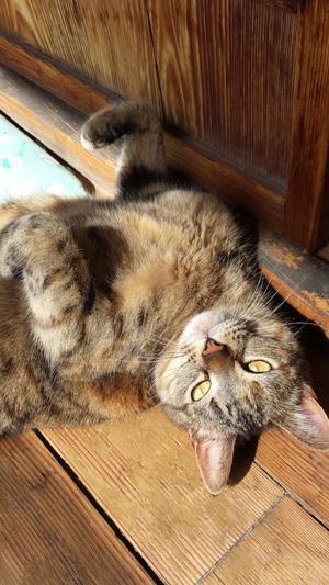 猫堂、ネコと動物愛護チャリティーカレンダー2017、2月-07