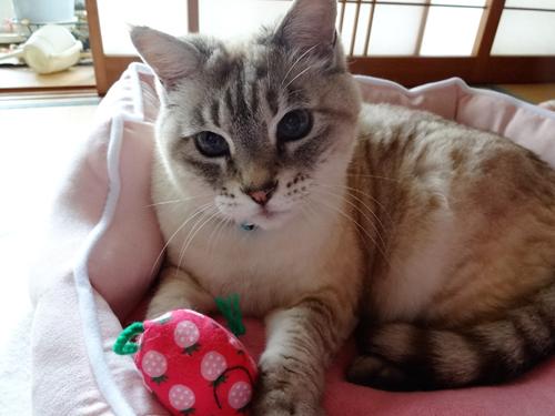 猫堂、ネコと動物愛護チャリティーカレンダー2017、3月-02