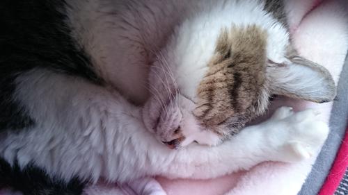 猫堂、ネコと動物愛護チャリティーカレンダー2017、3月-03