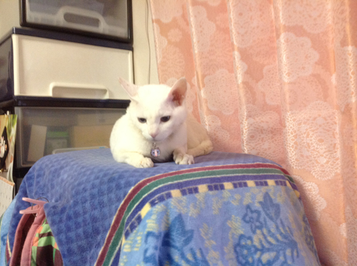 猫堂ネコと動物愛護チャリティーカレンダー2017、3月-05
