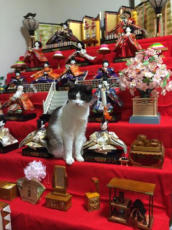 猫堂、ネコと動物愛護チャリティーカレンダー2017、3月-06