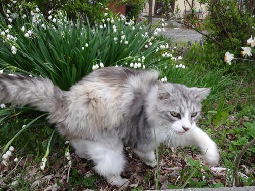 猫堂、ネコと動物愛護チャリティーカレンダー2017、4月-01