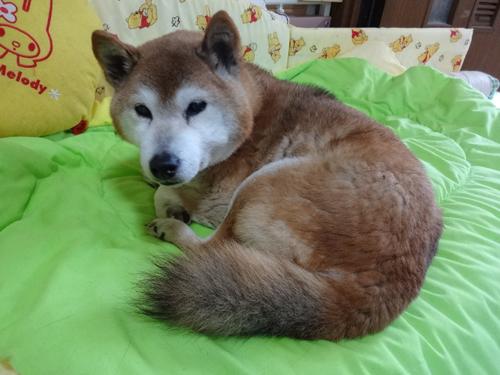 猫堂、ネコと動物愛護チャリティーカレンダー2017、4月-04