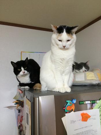 猫堂、ネコと動物愛護チャリティーカレンダー2017、5月-02