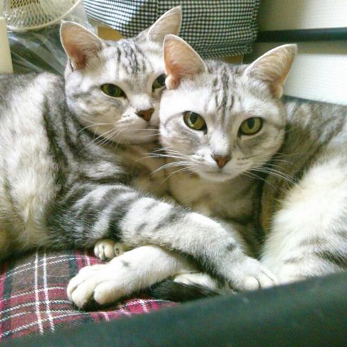 猫堂、ネコと動物愛護チャリティーカレンダー2017、5月-03