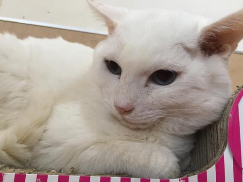 猫堂、ネコと動物愛護チャリティーカレンダー2017、5月-05