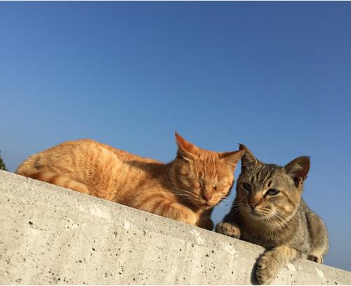 猫堂、ネコと動物愛護チャリティーカレンダー2017、6月-01
