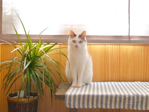 猫堂、ネコと動物愛護チャリティーカレンダー2017、6月-03