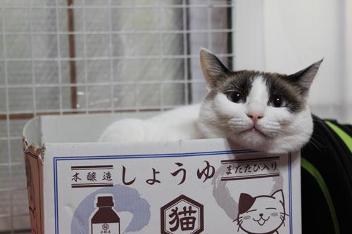 猫堂、ネコと動物愛護チャリティーカレンダー2017、6月-04