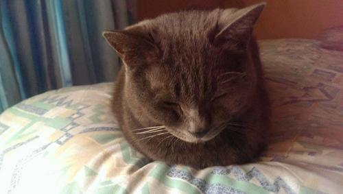 猫堂、ネコと動物愛護チャリティーカレンダー2017、7月-02