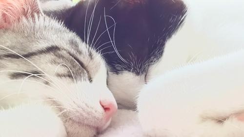 猫堂、ネコと動物愛護チャリティーカレンダー2017、8月-04