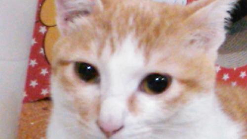 猫堂、ネコと動物愛護チャリティーカレンダー2017、9月-03