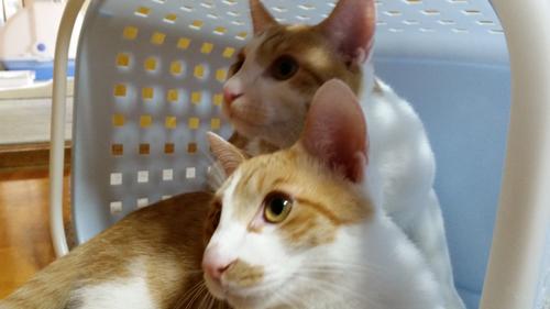 猫堂、ネコと動物愛護チャリティーカレンダー2017、9月-04