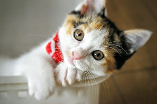 猫堂、ネコと動物愛護チャリティーカレンダー2017、10月-01