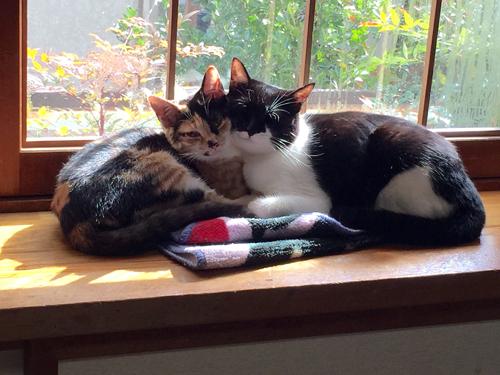 猫堂、ネコと動物愛護チャリティーカレンダー2017、10月-02
