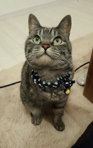 猫堂、ネコと動物愛護チャリティーカレンダー2017、10月-05