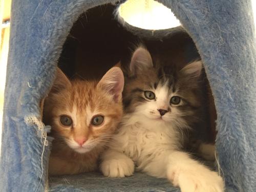猫堂、ネコと動物愛護チャリティーカレンダー2017、11月-01