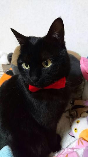 猫堂、ネコと動物愛護チャリティーカレンダー2017、11月-06