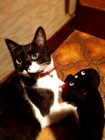猫堂、ネコと動物愛護チャリティーカレンダー2017、12月-07