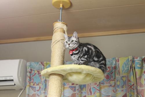 ネコと動物愛護チャリティーカレンダー2018、11月の2