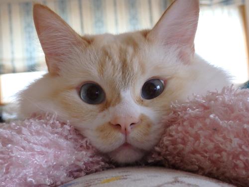ネコと動物愛護チャリティーカレンダー2018、2月