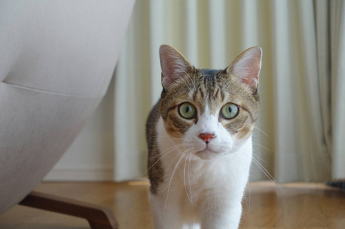 ネコと動物愛護チャリティーカレンダー2018、6月の2