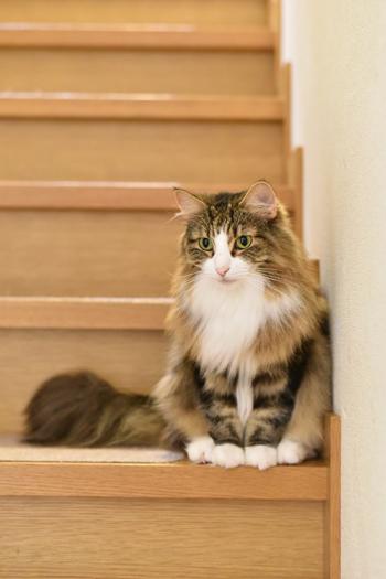 ネコと動物愛護チャリティーカレンダー2018、7月の1