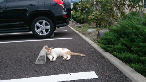 ネコと動物愛護チャリティーカレンダー2018、8月の2