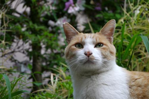 ネコと動物愛護チャリティーカレンダー2018、8月の3