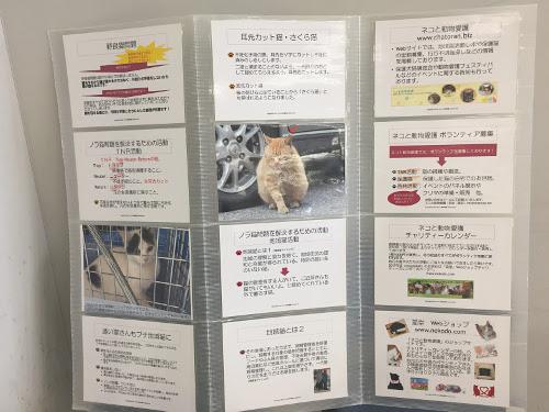 プチ地域猫活動パネル展示