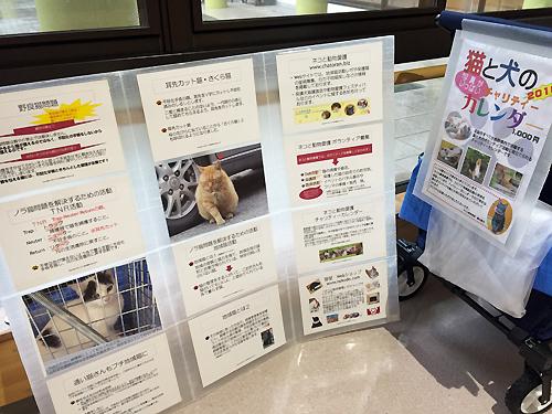 ネコと動物愛護、プチ地域猫活動パネル展示