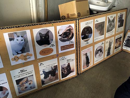 第13回保護犬猫譲渡会2
